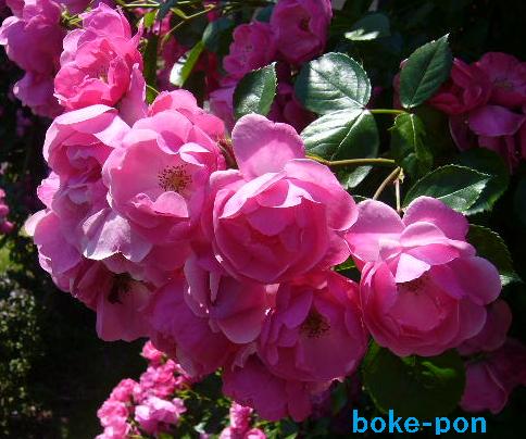 f:id:Boke-Boke:20190526173635p:plain