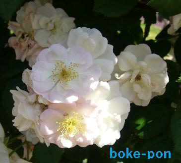 f:id:Boke-Boke:20190526173755p:plain