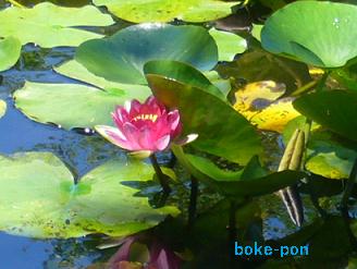 f:id:Boke-Boke:20190616221518p:plain
