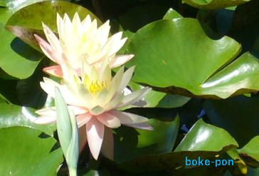 f:id:Boke-Boke:20190616221617p:plain