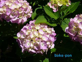 f:id:Boke-Boke:20190616222420p:plain