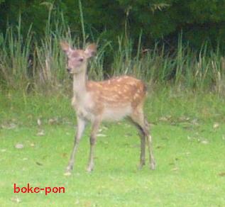 f:id:Boke-Boke:20190710170900p:plain