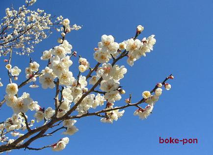 f:id:Boke-Boke:20200209172452p:plain