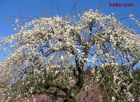 f:id:Boke-Boke:20200209173903p:plain