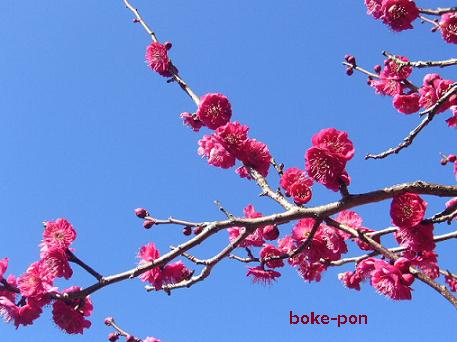f:id:Boke-Boke:20200209175009p:plain
