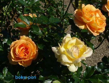 f:id:Boke-Boke:20201109143418p:plain