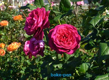 f:id:Boke-Boke:20201109143633p:plain