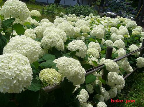 f:id:Boke-Boke:20210615153427p:plain
