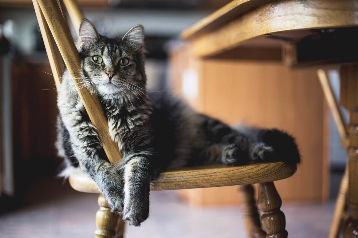 テレワーク、椅子