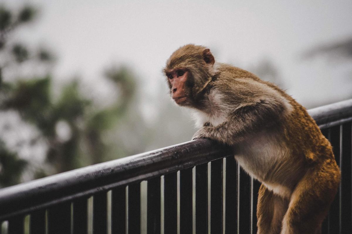 猿でもわかるROE