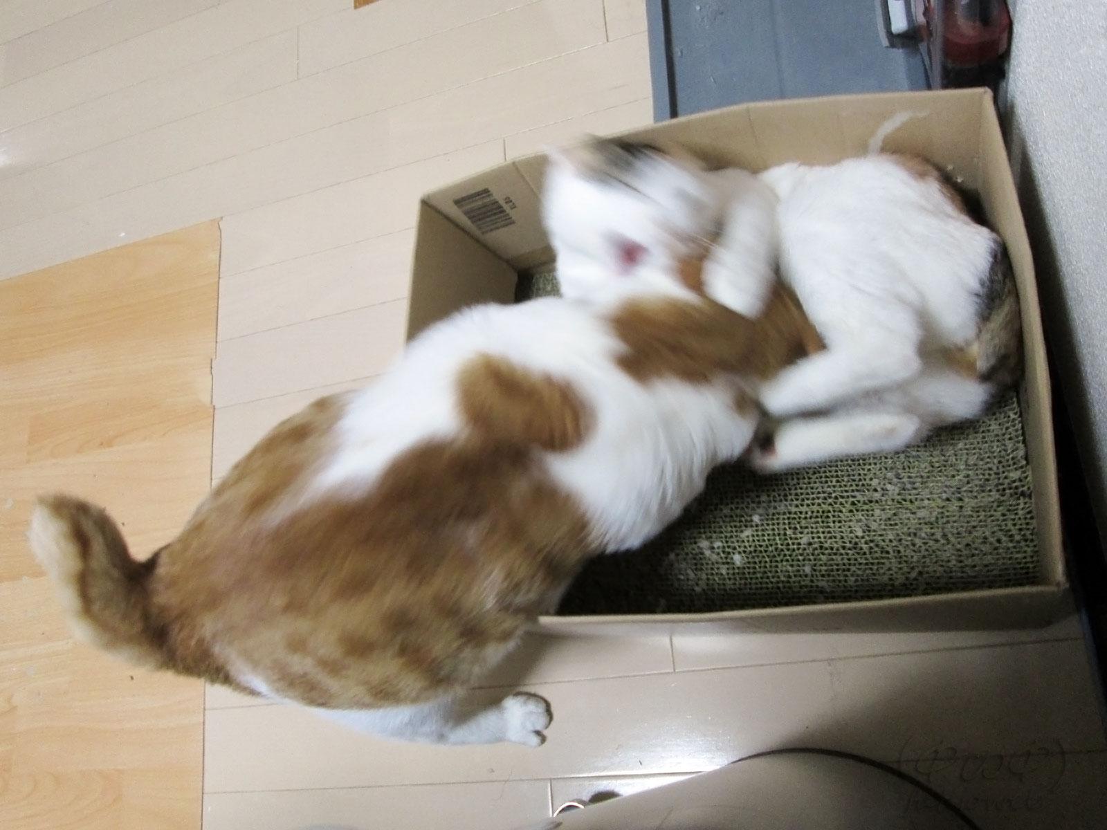 猫キック炸裂