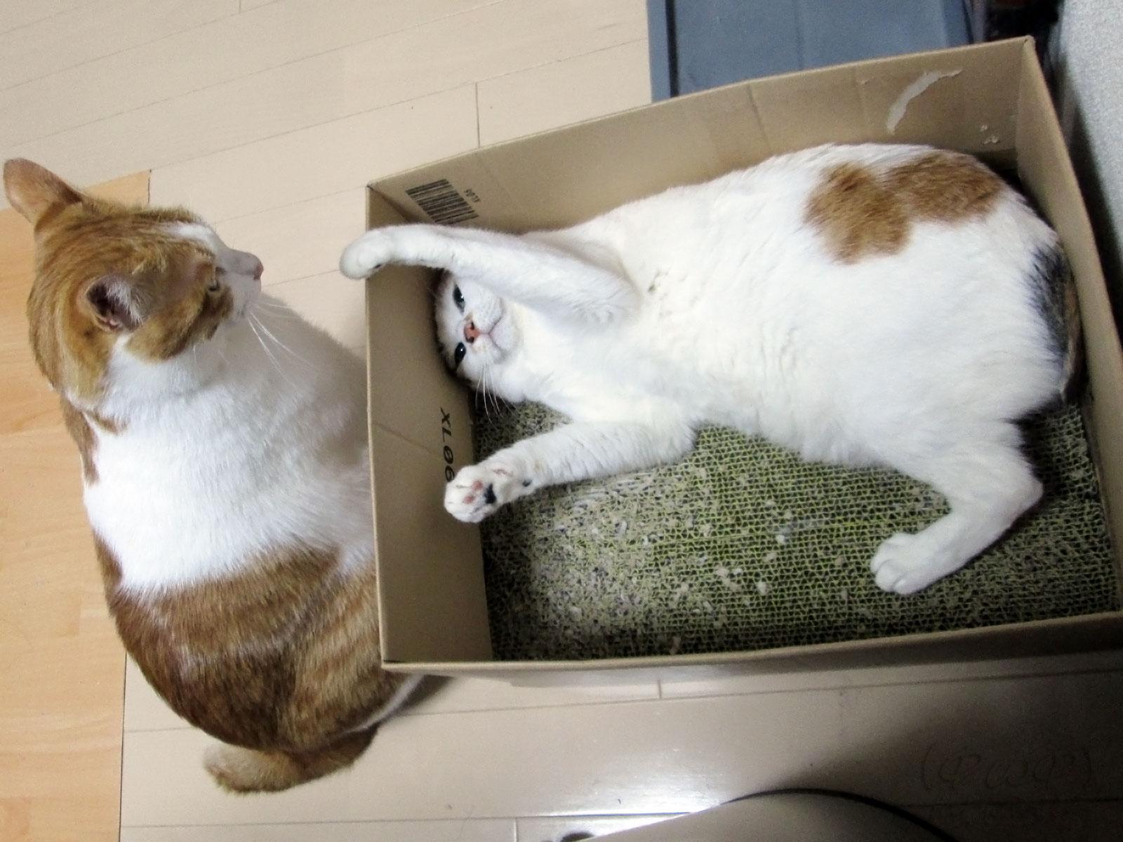 にらみ合う2頭の猫