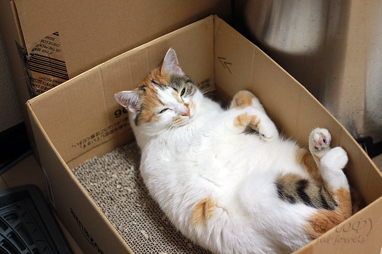 思い思いの姿勢でくつろぐ猫