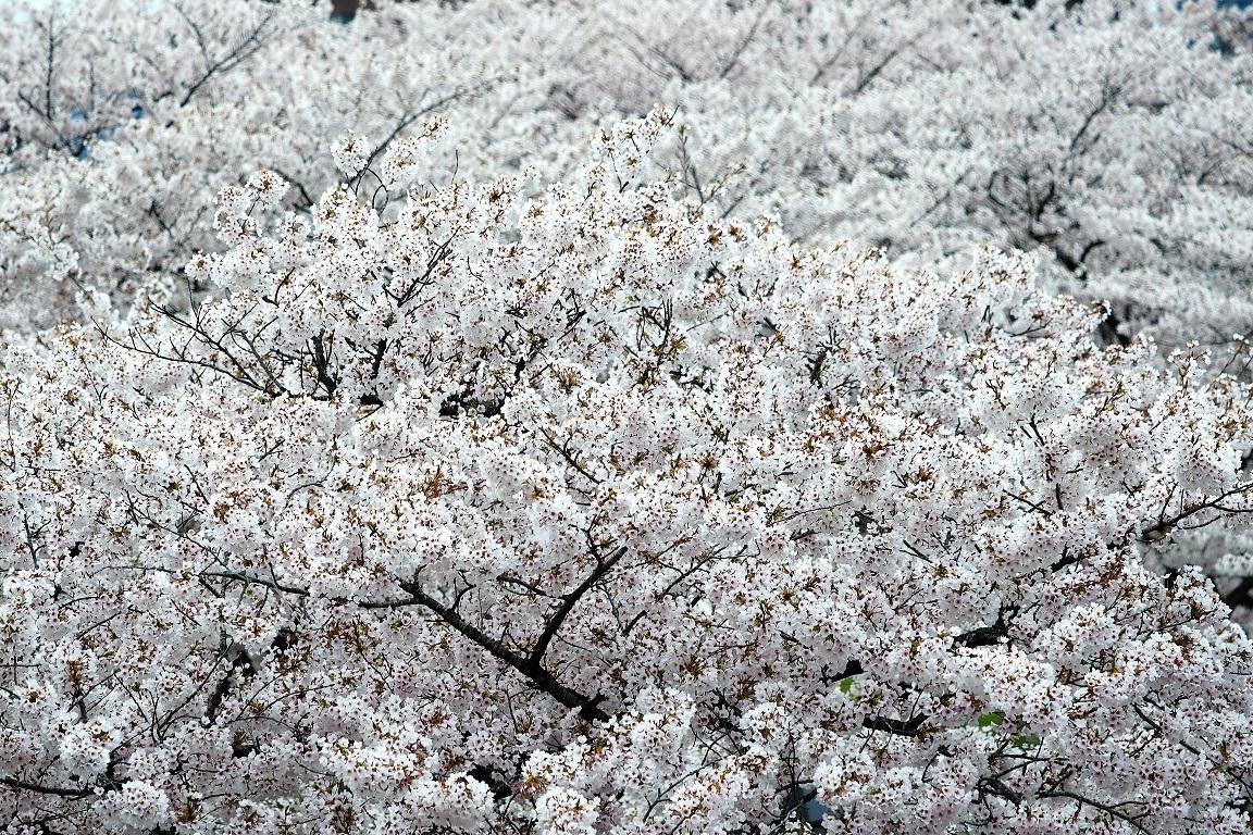 f:id:BuchiBuchi-kun:20200430215752j:plain