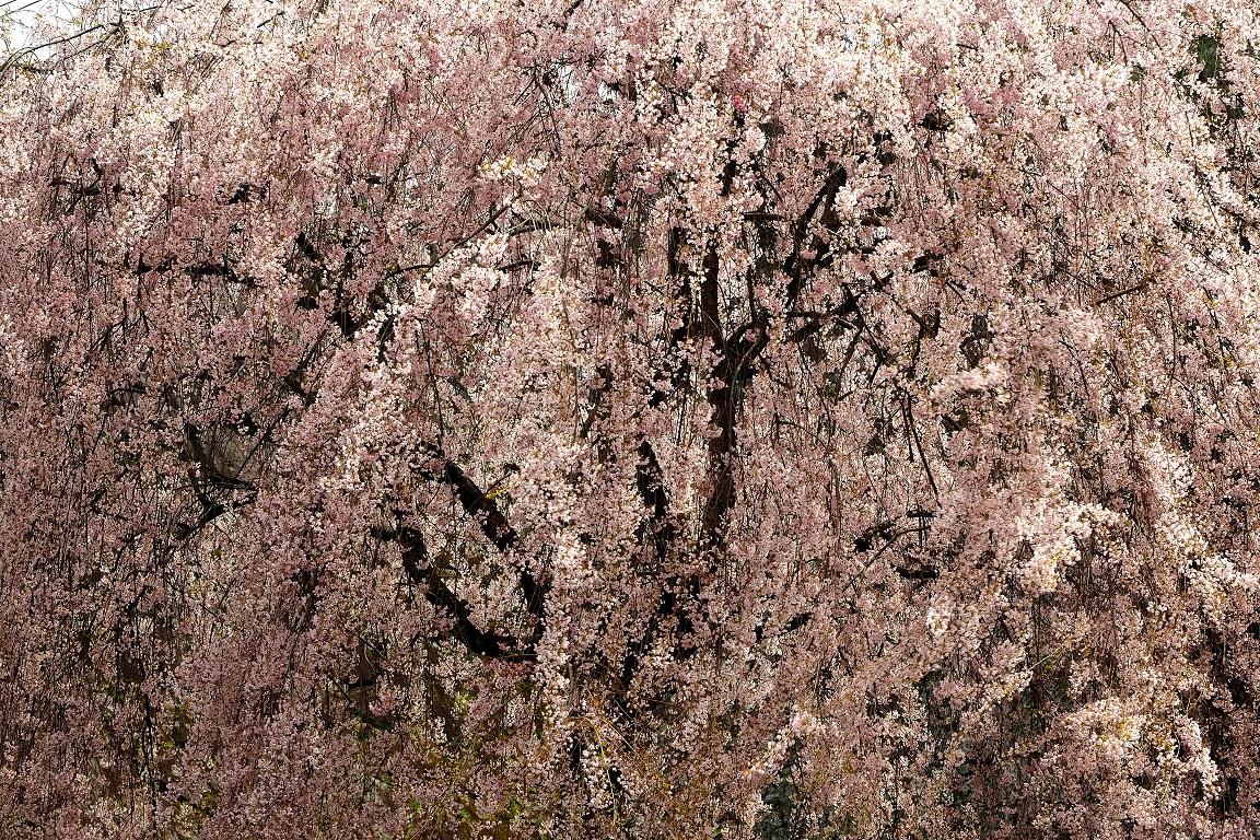 f:id:BuchiBuchi-kun:20200430221230j:plain