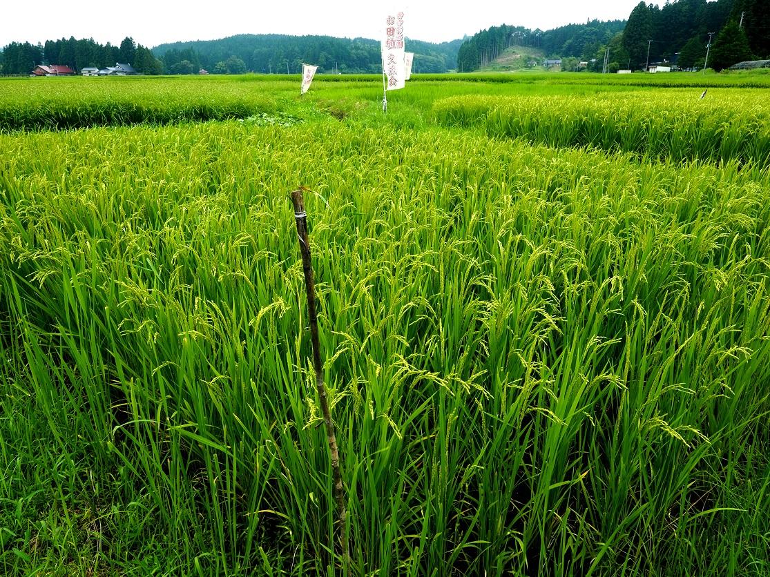f:id:BuchiBuchi-kun:20200825204222j:plain