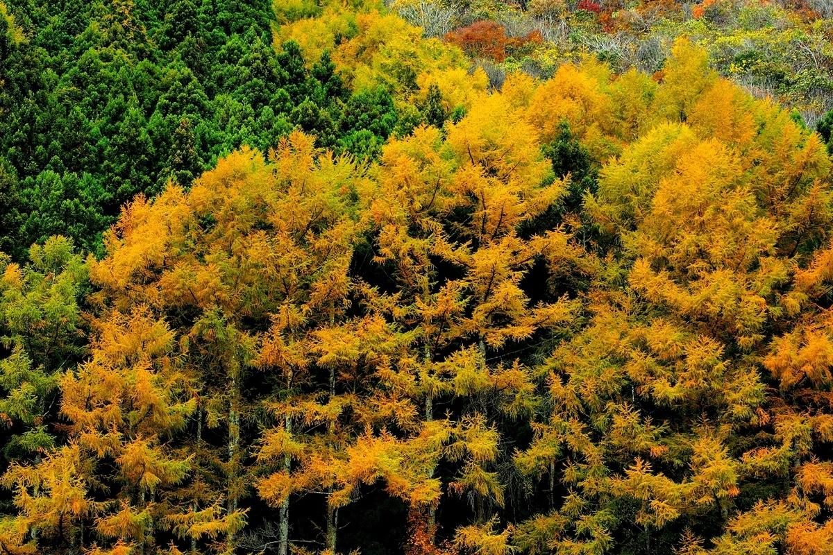 f:id:BuchiBuchi-kun:20201107122008j:plain