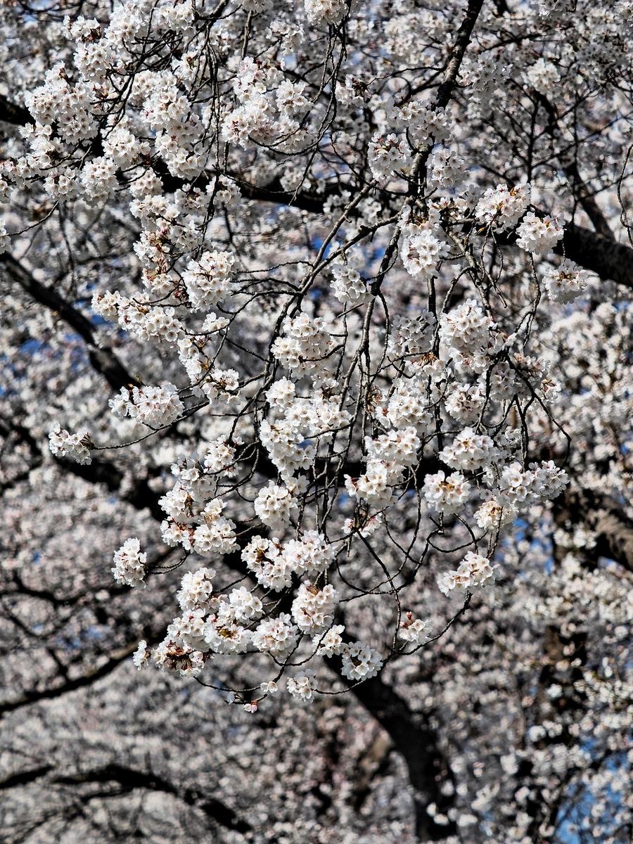 f:id:BuchiBuchi-kun:20210418120230j:plain