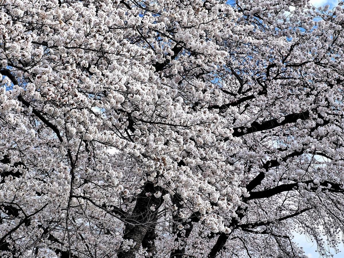 f:id:BuchiBuchi-kun:20210418120246j:plain