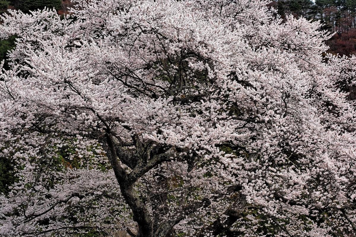 f:id:BuchiBuchi-kun:20210418184834j:plain