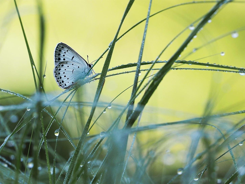f:id:ButterflyTakaji:20181122045241j:image
