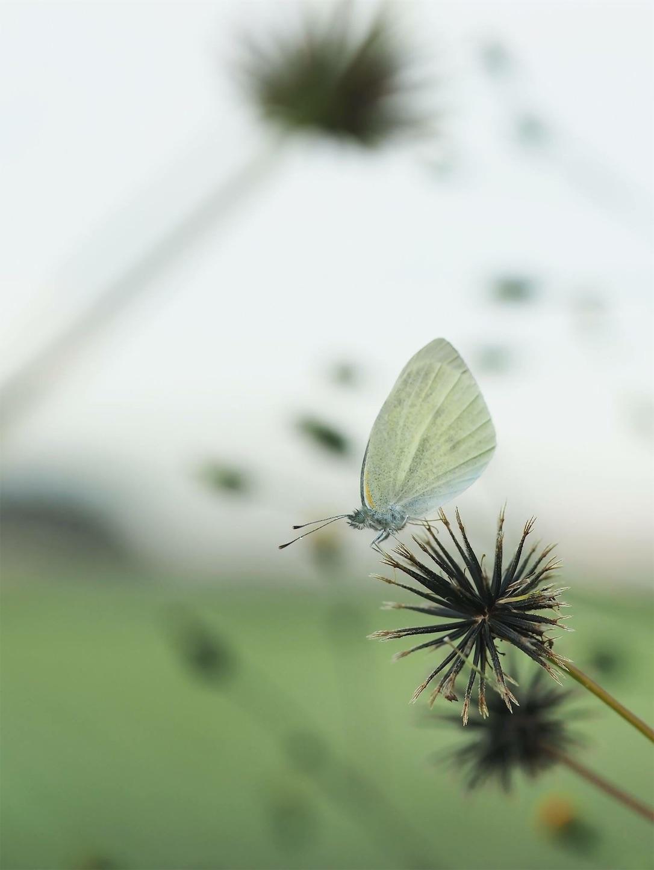f:id:ButterflyTakaji:20181123141447j:image