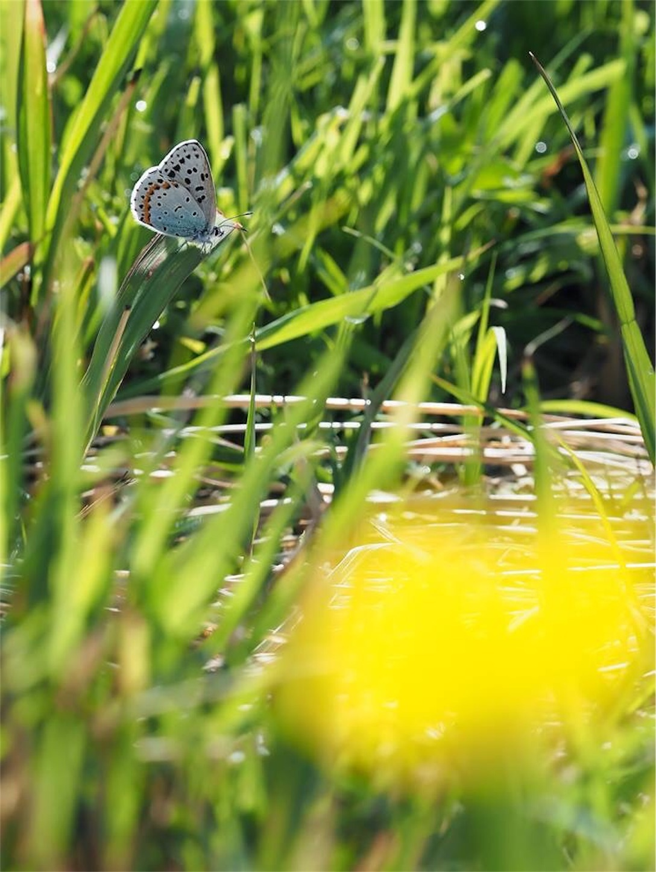 f:id:ButterflyTakaji:20181123141510j:image