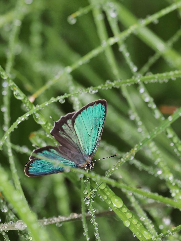 f:id:ButterflyTakaji:20181123143538j:image