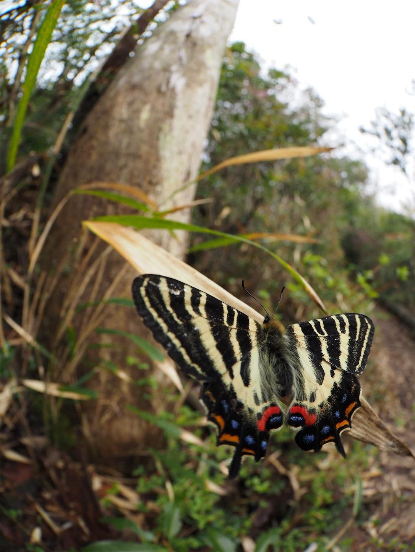 f:id:ButterflyTakaji:20181123143640j:image
