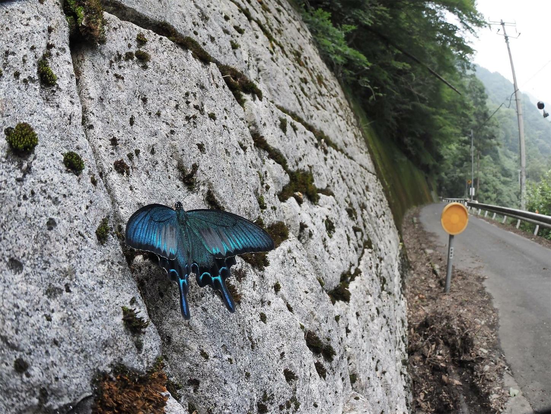f:id:ButterflyTakaji:20181125030407j:image