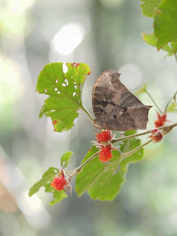 f:id:ButterflyTakaji:20181127025719j:image