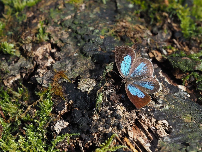 f:id:ButterflyTakaji:20181129023745j:image