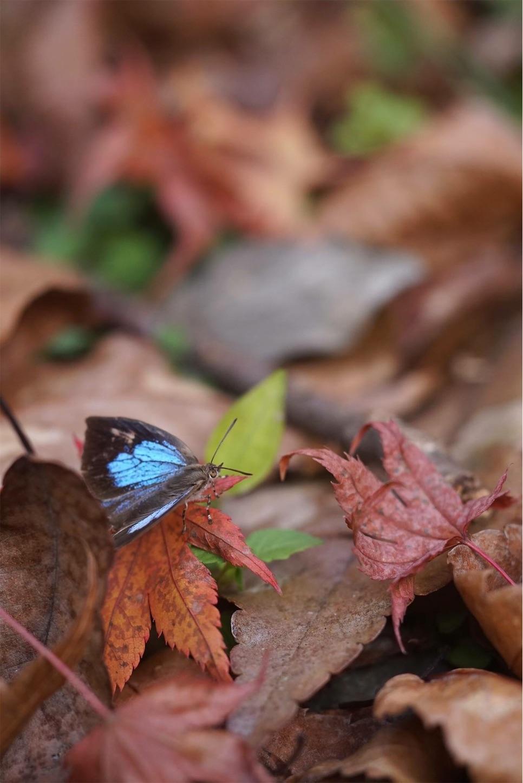 f:id:ButterflyTakaji:20181130172650j:image