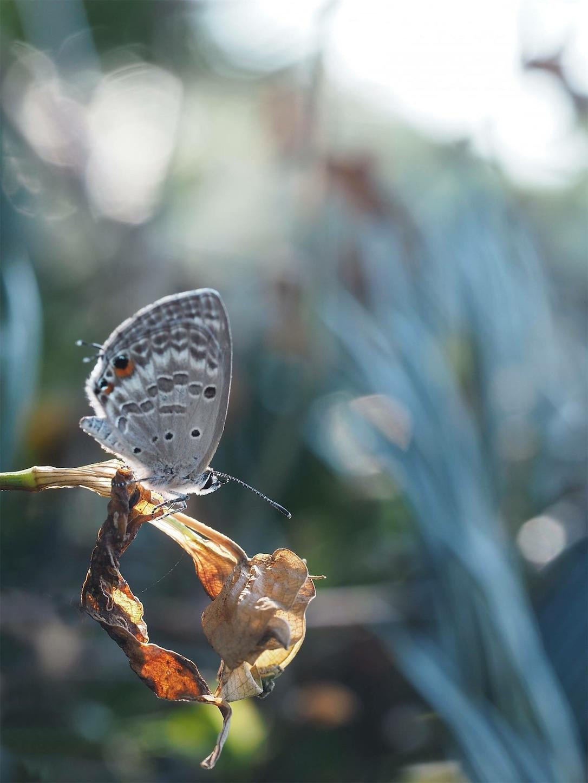 f:id:ButterflyTakaji:20181204191856j:image