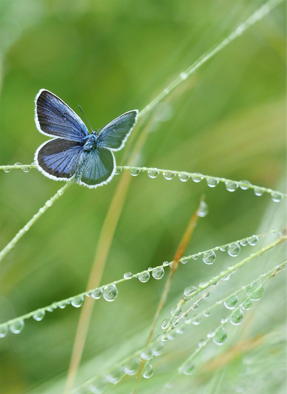 f:id:ButterflyTakaji:20181206042112j:image