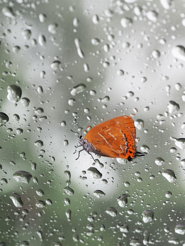 f:id:ButterflyTakaji:20181206042237j:image