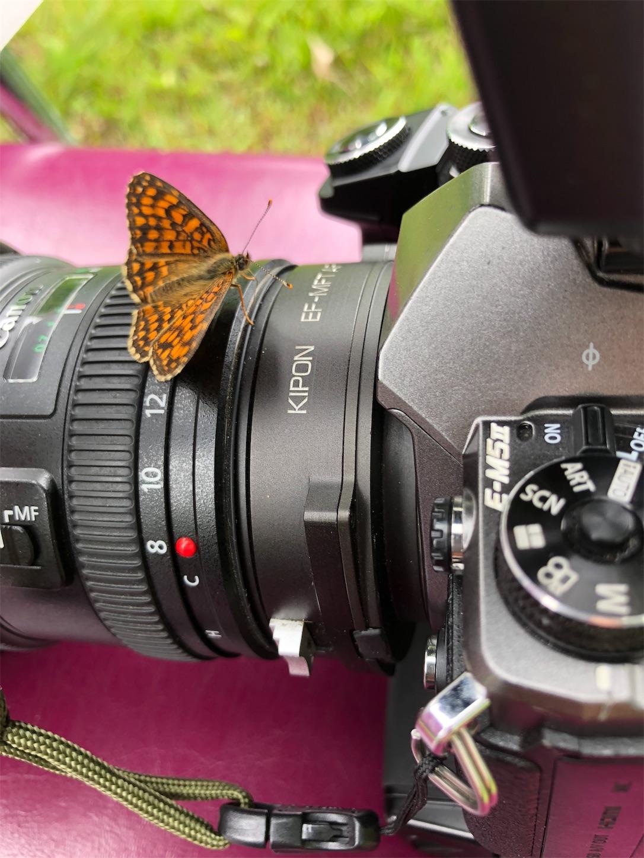 f:id:ButterflyTakaji:20181209055945j:image