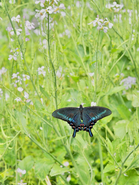 f:id:ButterflyTakaji:20181209080933j:image