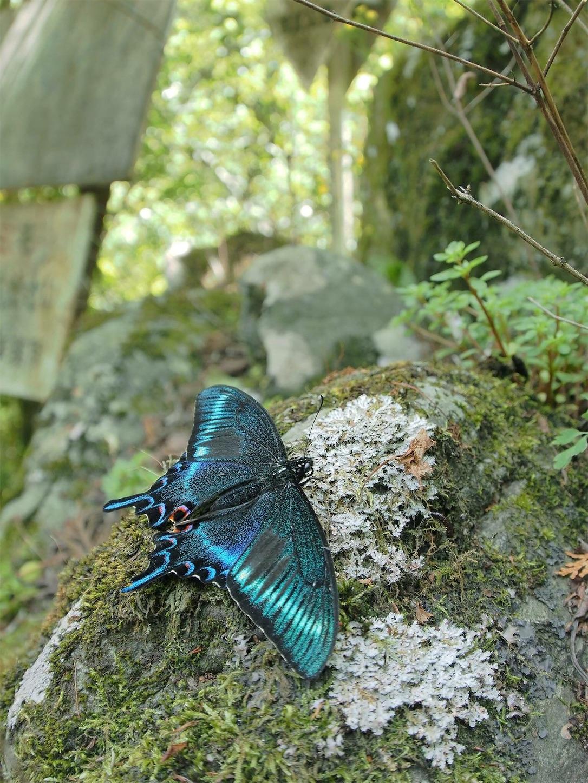 f:id:ButterflyTakaji:20181209081008j:image