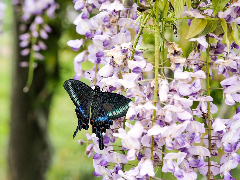 f:id:ButterflyTakaji:20181209081453j:image