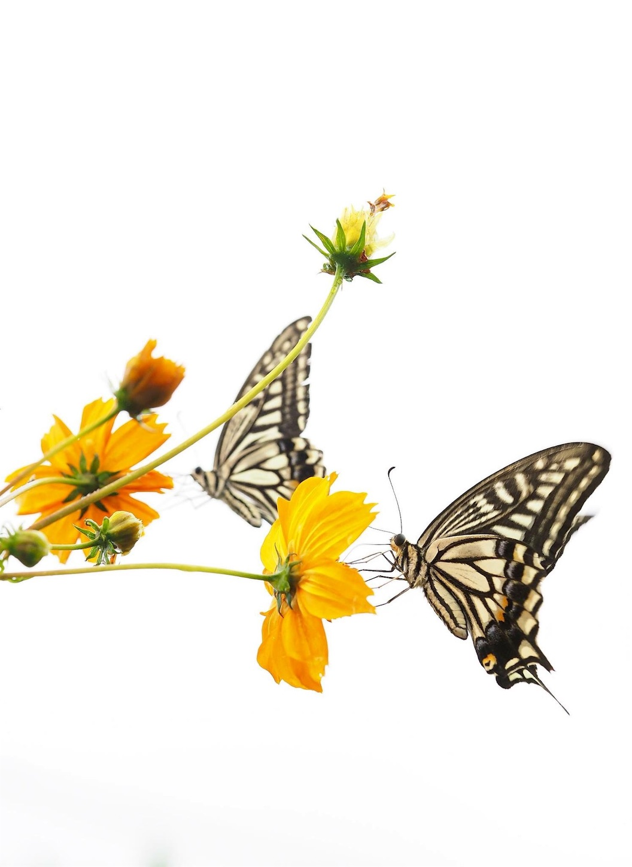 f:id:ButterflyTakaji:20181211025742j:image