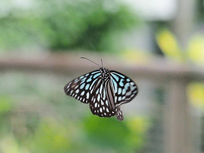f:id:ButterflyTakaji:20181213034829j:image