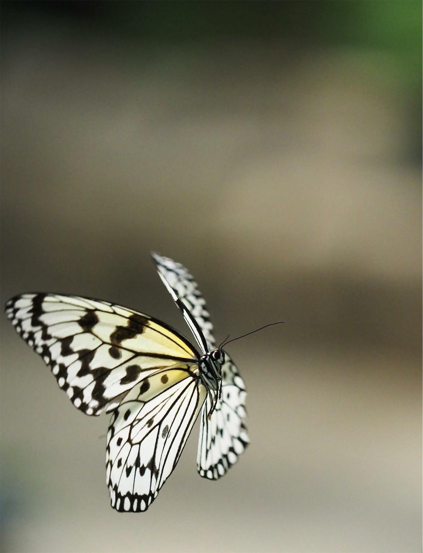 f:id:ButterflyTakaji:20181213035237j:image