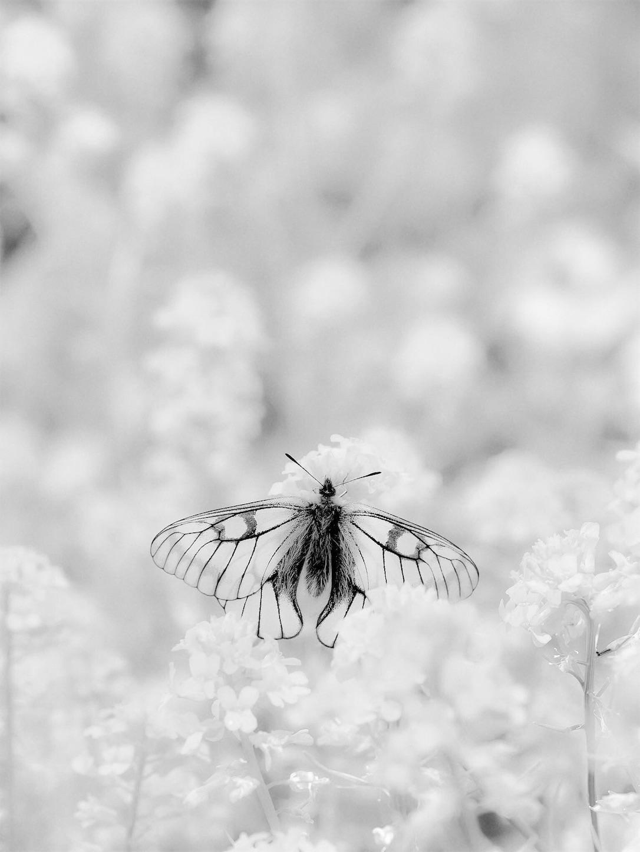 f:id:ButterflyTakaji:20181216045539j:image