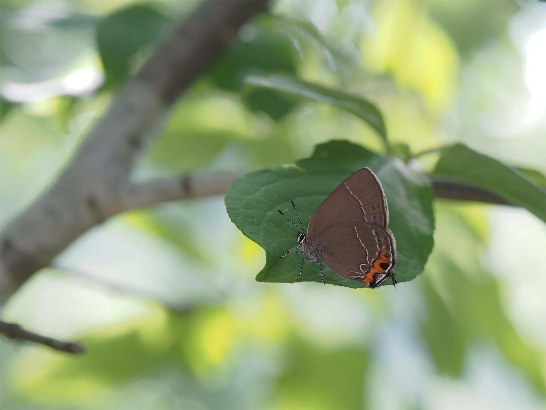 f:id:ButterflyTakaji:20181217071034j:image