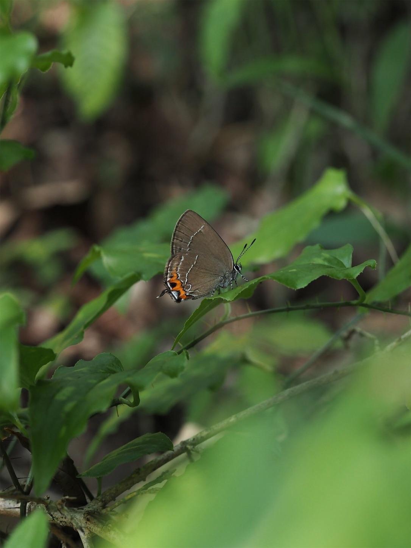 f:id:ButterflyTakaji:20181217071045j:image