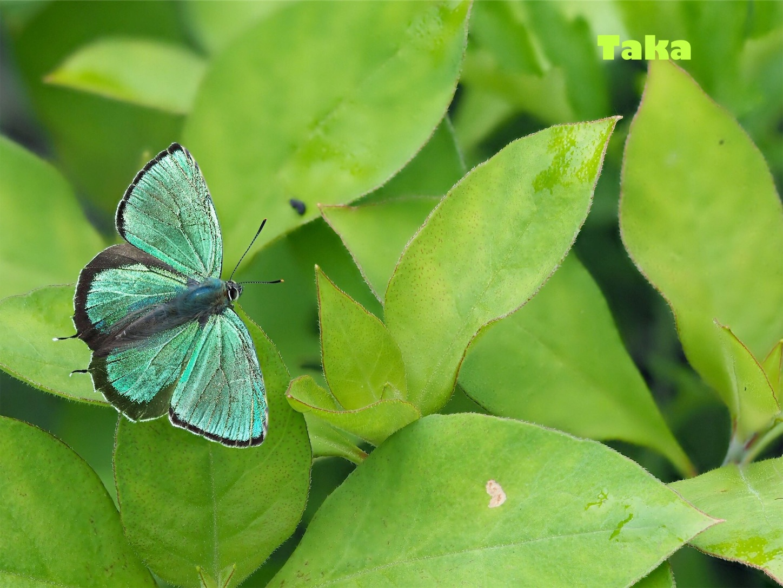 f:id:ButterflyTakaji:20181223045640j:image