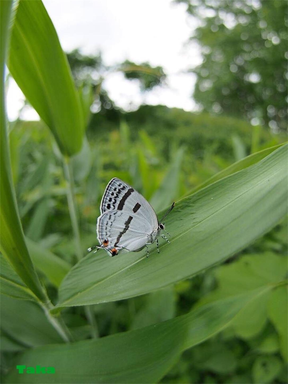 f:id:ButterflyTakaji:20181223045706j:image