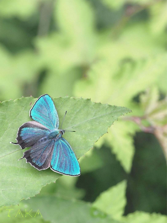 f:id:ButterflyTakaji:20181223045732j:image