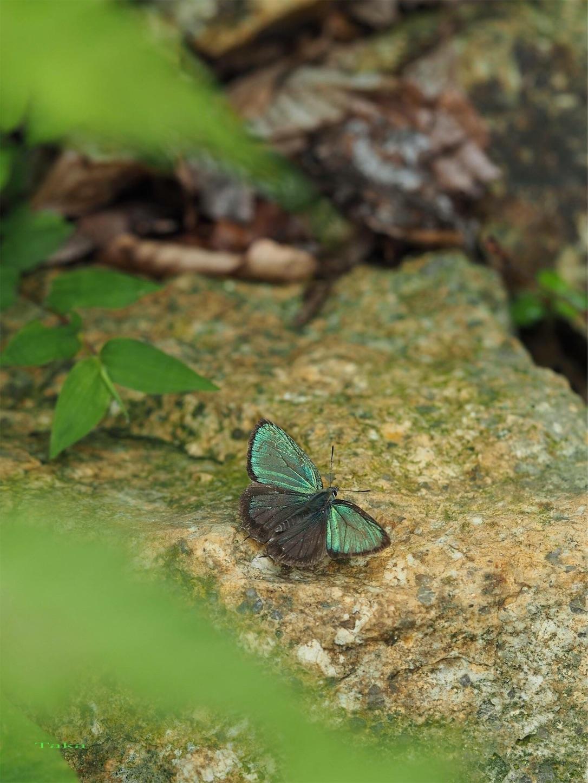 f:id:ButterflyTakaji:20181223045750j:image
